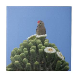 Gila Woodpecker on Saguaro Blooms Tile