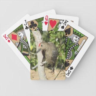 Gila Woodpecker Playing Cards