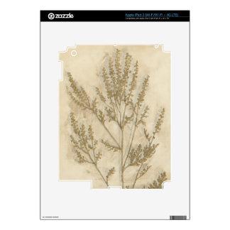 Gilded Foliage II iPad 3 Skins