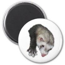 Gimme Ferret Magnet
