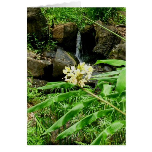 Ginger and Waterfall Card