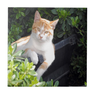 Ginger and White Cat Ceramic Tile