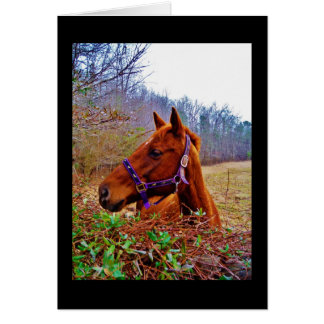 Ginger Brown Horse Greeting Card