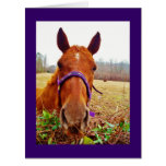 Ginger Brown Horse Face Card