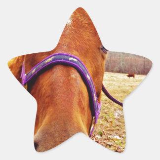 Ginger Brown Horse Face Star Sticker