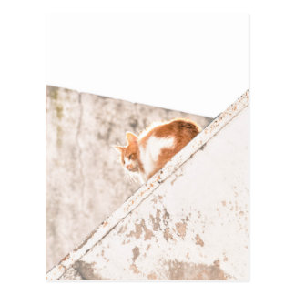 Ginger Cat Balcony Photography Postcard