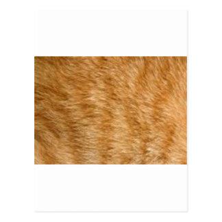 Ginger cat fur postcard