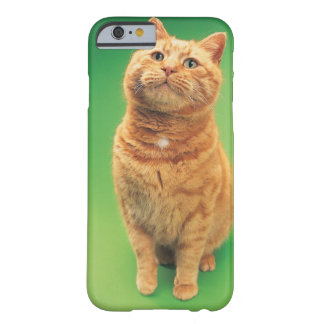 Ginger cat sitting, looking upwards barely there iPhone 6 case