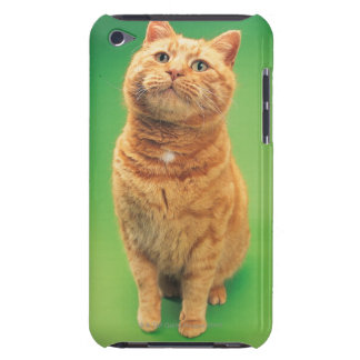 Ginger cat sitting, looking upwards iPod touch cover