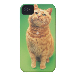 Ginger cat sitting, looking upwards iPhone 4 covers