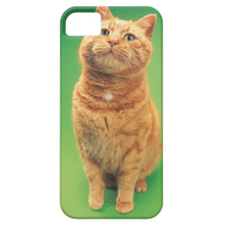 Ginger cat sitting, looking upwards iPhone SE/5/5s case