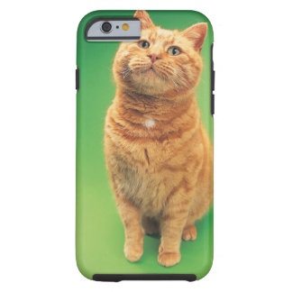 Ginger cat sitting, looking upwards tough iPhone 6 case