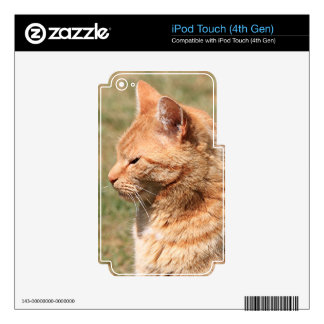 Ginger cat skins for iPod touch 4G