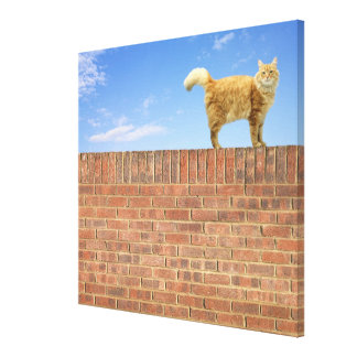 Ginger Cat Standing on Brick Wall Canvas Print