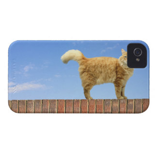 Ginger Cat Standing on Brick Wall Case-Mate iPhone 4 Cases