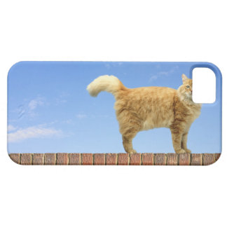 Ginger Cat Standing on Brick Wall iPhone SE/5/5s Case