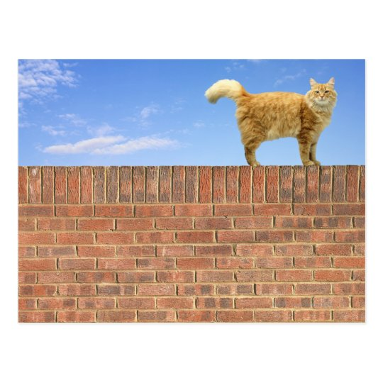 Ginger Cat Standing on Brick Wall Postcard