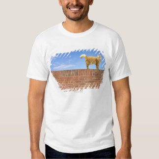 Ginger Cat Standing on Brick Wall T-shirt