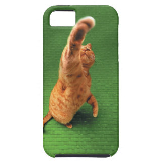 Ginger cat stretching out paw iPhone 5 cases