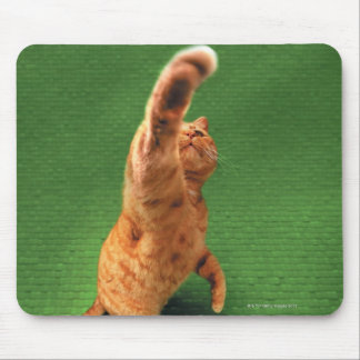 Ginger cat stretching out paw mouse pad