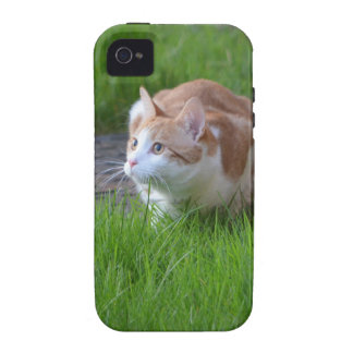 Ginger Cat Watching iPhone 4 Case