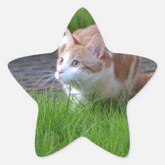 Ginger Cat Watching Star Sticker