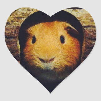 Ginger Guinea Pig Gifts Heart Sticker