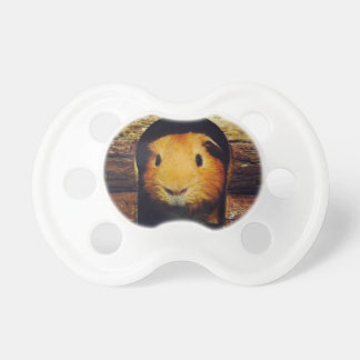 Ginger Guinea Pig Gifts Pacifier