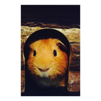 Ginger Guinea Pig Gifts Stationery