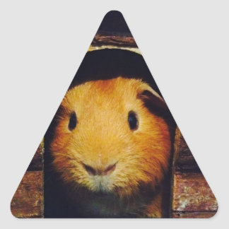 Ginger Guinea Pig Gifts Triangle Sticker