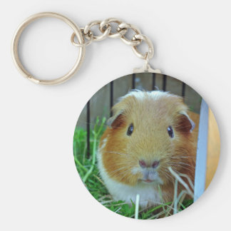 ginger guinea pig keychain