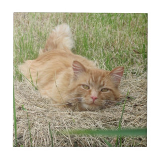 Ginger in the Hay Tile