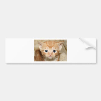 Ginger kitten car bumper sticker