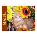 Ginger Kitten in Fall Autumn Basket, Thanksgiving Postcard