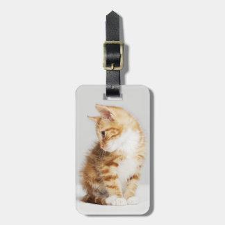 Ginger Kitten Luggage Tag