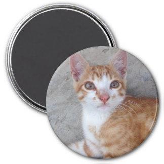 Ginger Kitten Magnet