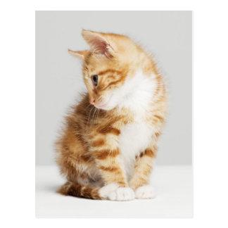 Ginger Kitten Postcard