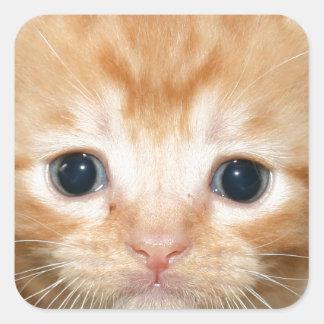 Ginger kitten square sticker
