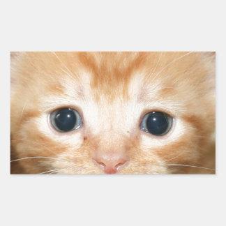 Ginger kitten rectangular sticker