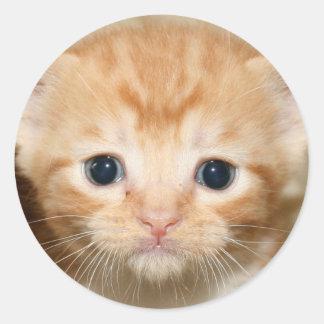 Ginger kitten classic round sticker