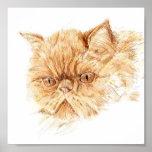 ginger persian cat posters