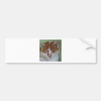 Ginger Tabby Cat Having A Cat Nap Bumper Sticker