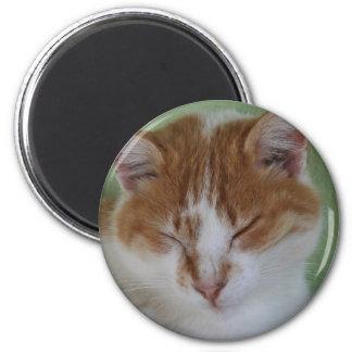 Ginger Tabby Cat Having A Cat Nap Fridge Magnet
