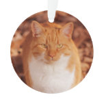 Ginger Tabby Cat Holiday Christmas Ornament