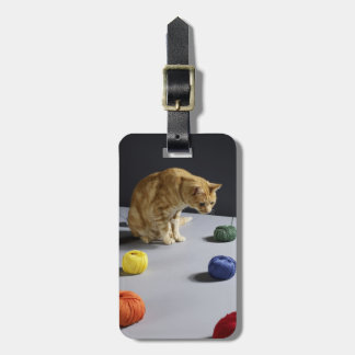Ginger tabby cat sitting on table luggage tag