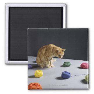 Ginger tabby cat sitting on table fridge magnet