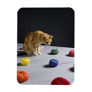Ginger tabby cat sitting on table flexible magnet