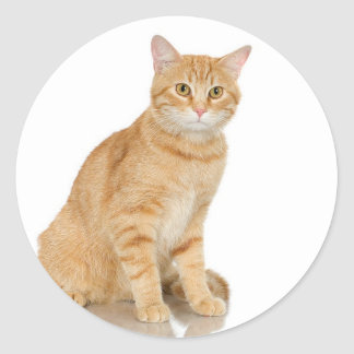 Ginger Tabby Classic Round Sticker