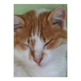 Ginger Tabby Having A Cat Nap 5.5x7.5 Paper Invitation Card
