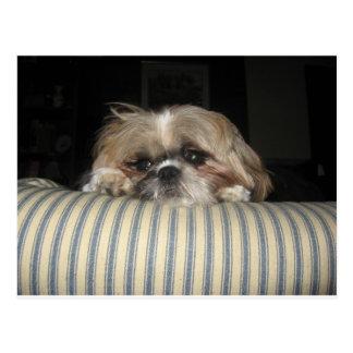 Ginger the Dog Postcard